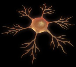 neuron involved in carpal tunnel tendonitis test