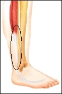 pain at back lateral side of lower leg